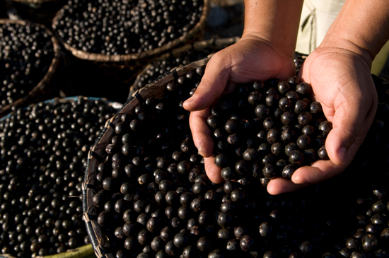 Does Acai Berry Help You Lose Weight?