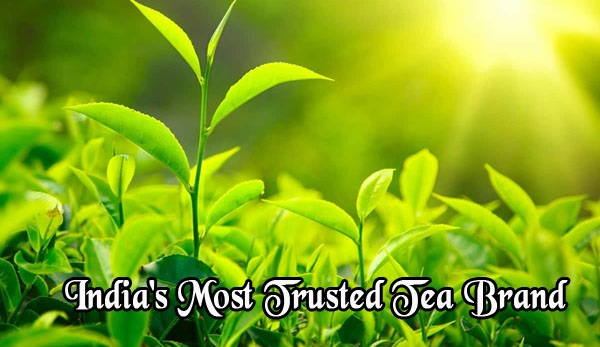 Top tea brands india